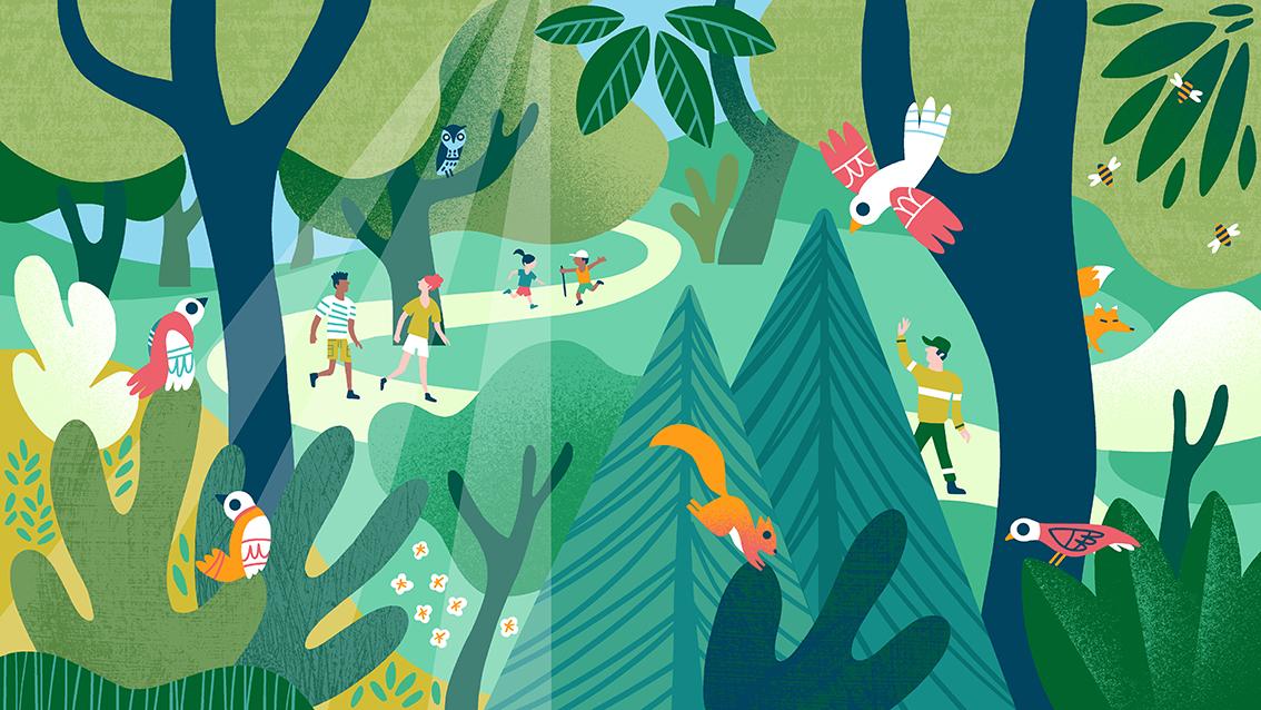Un été en forêt avec l'Office National des Forêts, Clod illustrateur